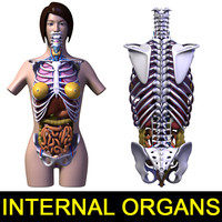 human female body anatomy 3d model