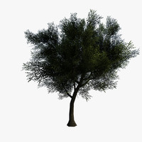 3d ready tree generated model