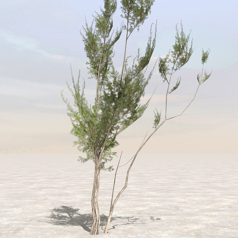 Tree3_01.jpg