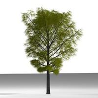 plane tree 3d model