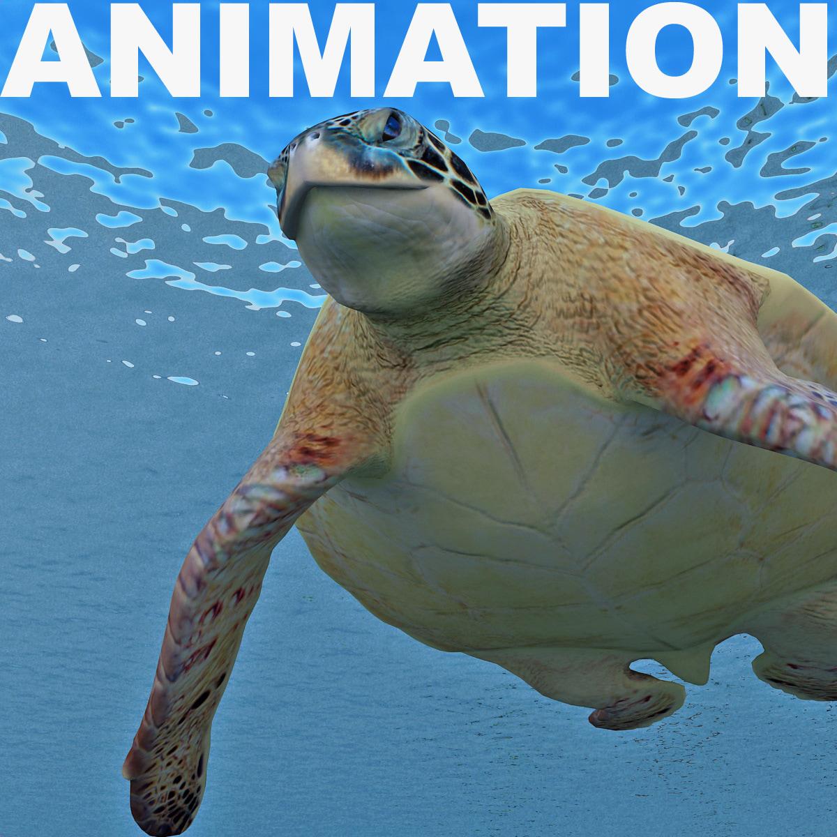 Turtle_Chelonia_Mydas_Animation_00.jpg