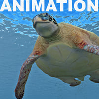Turtle Chelonia Mydas Animation