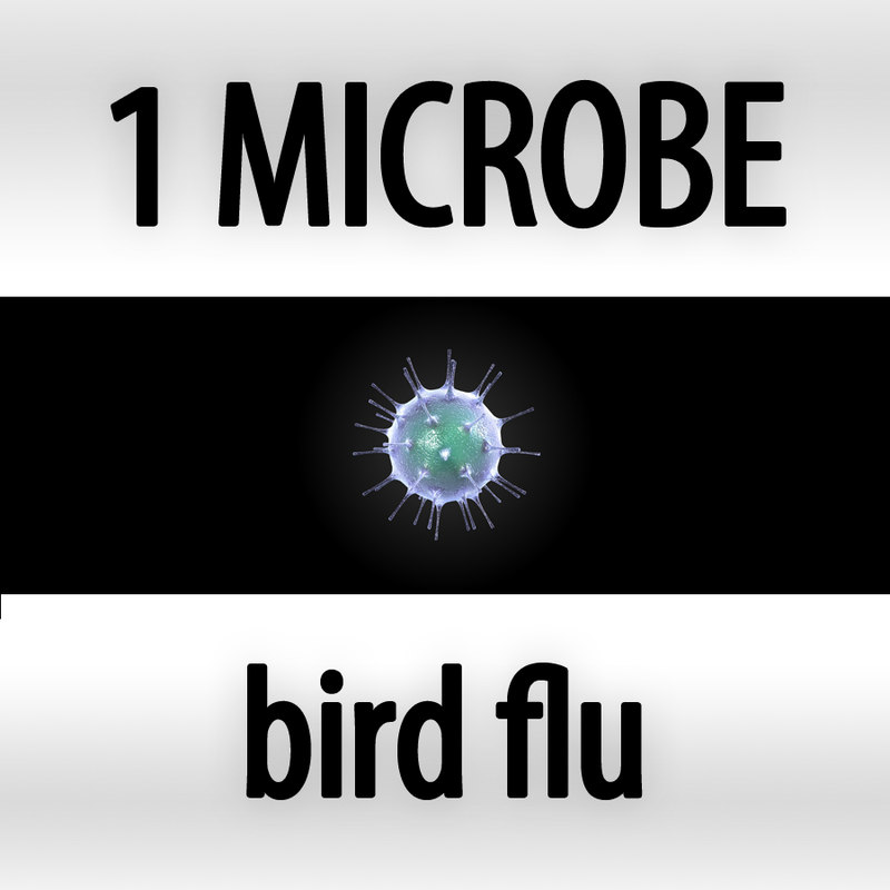 bird flu - influenza a virus h5n1_cover.jpg