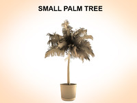 Small Palm
