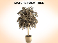 palms plant 3d obj
