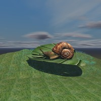 SNAIL ON LEAF SCENE