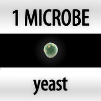 yeast - saccharomyces cerevisiae