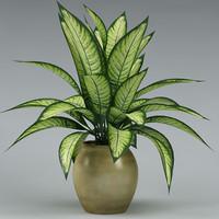 plant_49