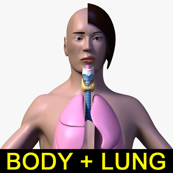 lungs_Anatomy_leo3dmodels_000.jpg