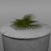 maya fern