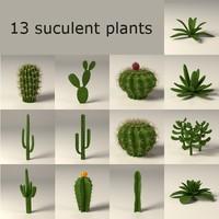 3d cactuses suculent model
