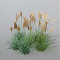 Cortaderia grass Bundle1