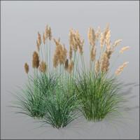 3d pampas grass cortaderia model