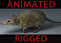 3d model rat animation