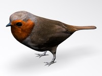 european robin bird 3d model
