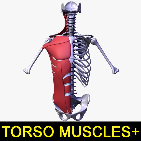 Torso_muscle_00.jpg