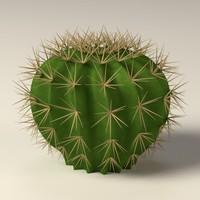 cactus ma