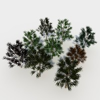 3d deciduous tree pack