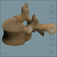 3d vertebrae anatomy model