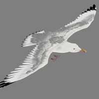 obj seagull gull animation