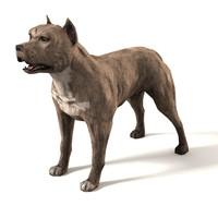maya pit bull dog