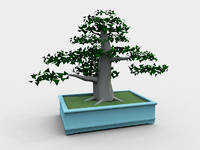 bonsai pot trees max