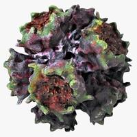 3d adeno virus type 3