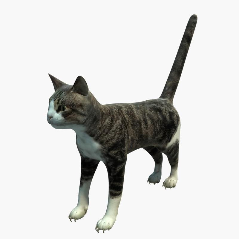 Cat_01_sig_Vray.jpg