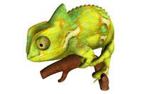 3d model chameleons lizards