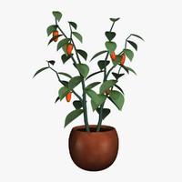 PL 01Pepper Plant03