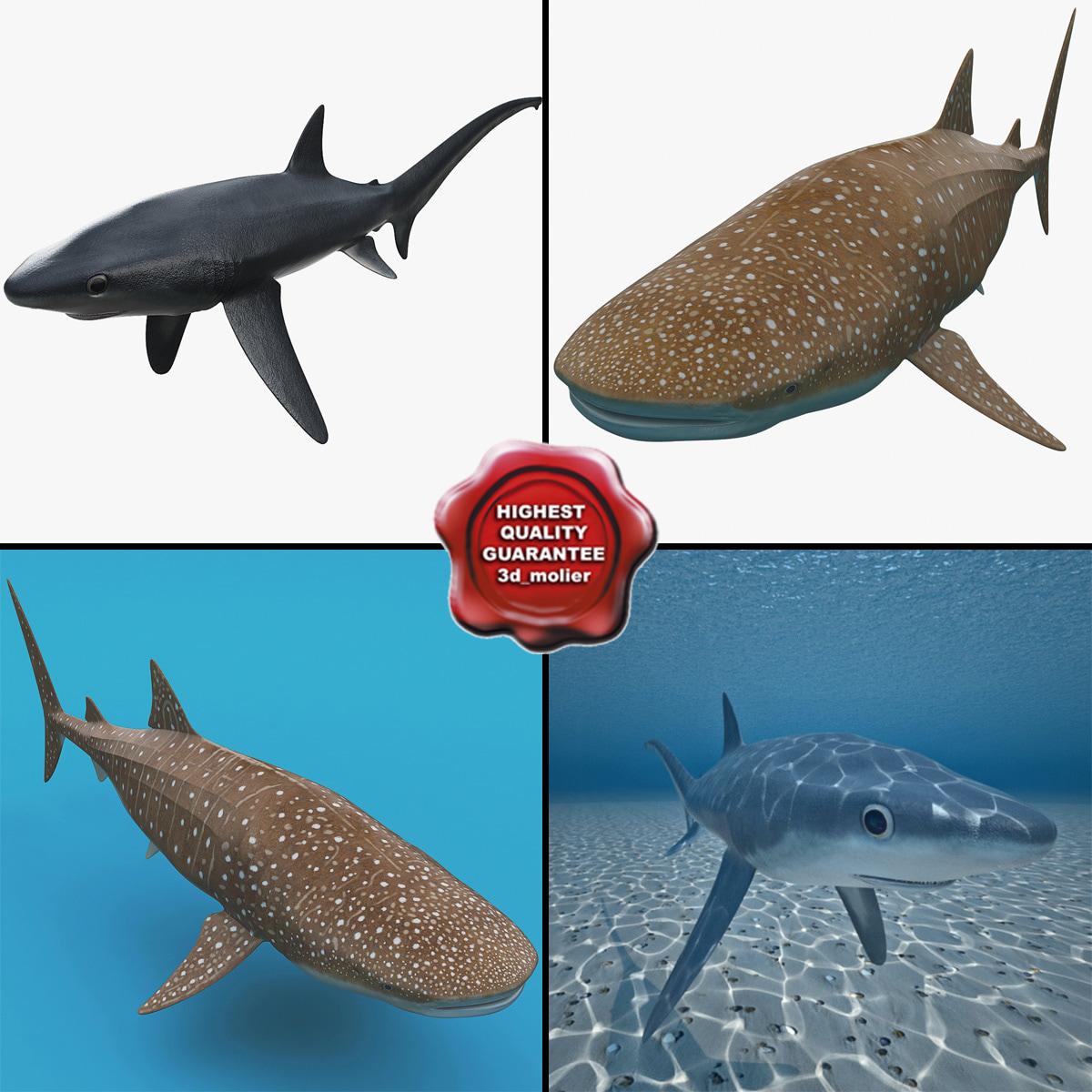 Sharks_Collection_v2_000.jpg