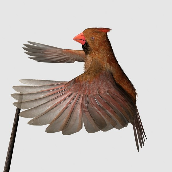 cardinal female 2012 rigged lightwave 3d lwo - CARDINAL, FEMALE 2012 for Lightwave... by r189