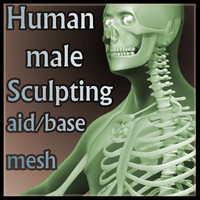 Anatomical Sculpting base mesh - Human Male