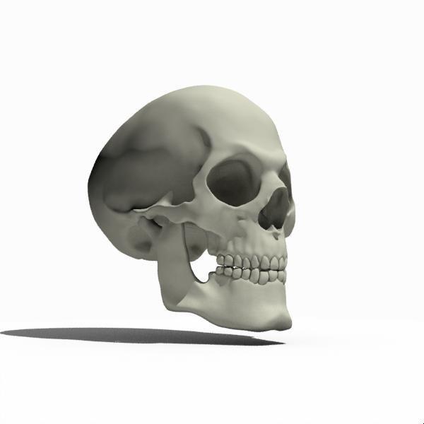 Skull_side.jpg
