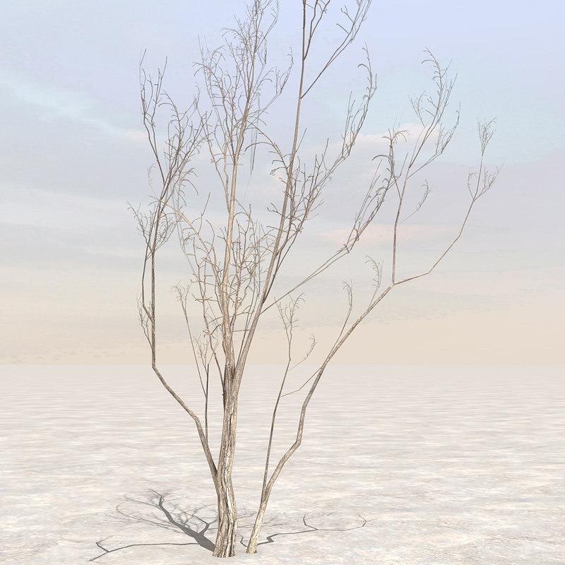 Tree4_01.jpg