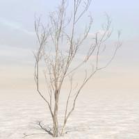 Afghanistan Tree 04