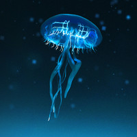 jellyfish jelly fish 3d obj