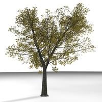 3d 3ds plane tree