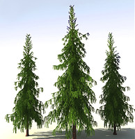 3d trees picea forest model