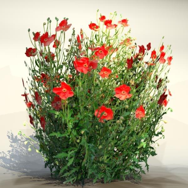 Flower_09_1.jpg