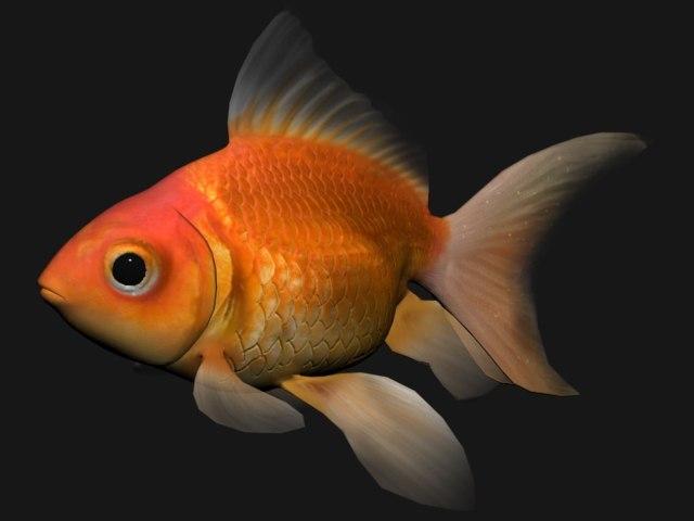 GoldenFish_thumb_1.jpg