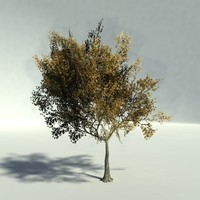 3d model of ready tree autumn