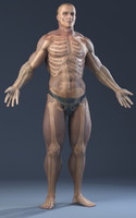 3d model realistic anatomy skeleton skin