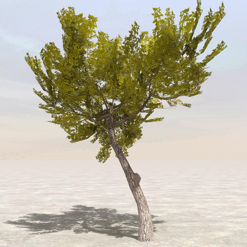 Tree6_01.jpg