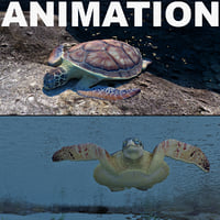 3d turtle chelonia mydas