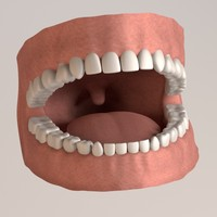 permanent human teeth 3d 3ds