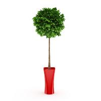 pot tree 3d model