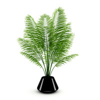 potted palm 3d obj