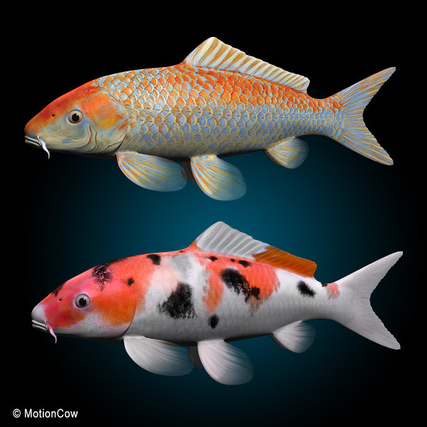 Coy fish driverlayer search engine for Large koi fish