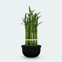 3d model lucky bamboo pot plant
